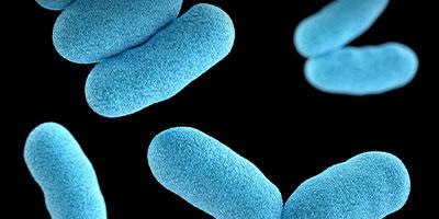 bacteries-menu